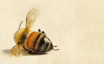 La storia delle api recensione